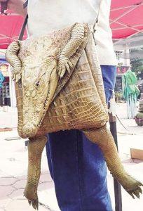 Igazi krokodilbőr