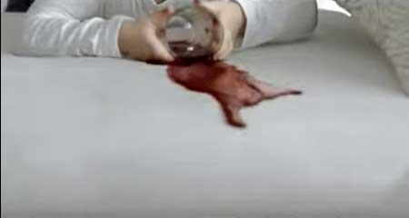 vizzel-tisztithato-folt